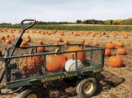 Allison's Farm Market Pumpkin Patch