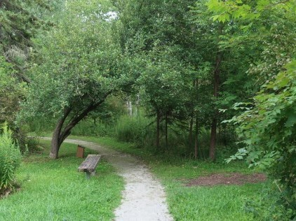 outdoor path with lush green forest and grass